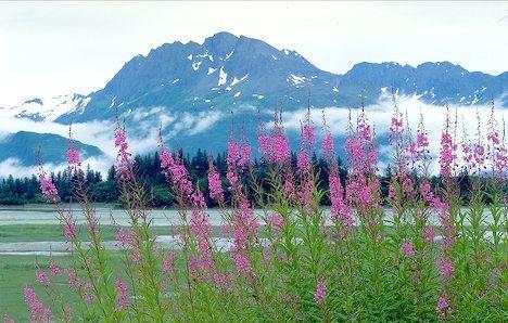 beautiful-alaska-scenic_4430.jpg