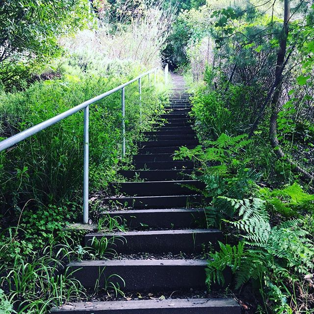 """I climb these stairs almost every day with Asa. Every day to get her a nap and me a bit of movement.  As a woman who loves a good routine, this has quickly become one. I put on my well-worn shoes, strap her to my body, and start walking.  I am focused, deliberate, intent on """"getting it done"""". It feels good to have control over this little part of my day. Good to at least get one thing checked off my list.  And then, just yesterday, I looked up and noticed the fresh flowers and plants that'd popped up along the side of the stairs. New life, gorgeous and green, reveling in the sun. """"How long have they been here?"""" I asked myself, knowing full well I walked this way 24 hours ago and didn't notice a damn thing.  This is what happens when we turn our lives into a series of locked-in routines. We slowly numb and become lulled to sleep by the repetition as we plod along, one foot in front of the other, eye on the prize and focused to the point of blindness.  It's in this state of numbed living that we miss the beauty, the joy, the miraculous vibrance popping up at our very feet.  Of course there are times that require laser-like focus and YET, more often than not this blind focus becomes our default.  Today, may you CARE for yourself by slowing picking your head up from its straight ahead """"get it done"""" gaze and look around.  What's to the left of you? And the right? What is above you? And below you?  What wonders are next to you, growing just alongside of you that you've missed while blindly trudging up the steep stairs of your life? . . . . #selfcare #wellness #mindfulness #health #lifecoach #healthcoach #care #spring #nature #motherhood"""