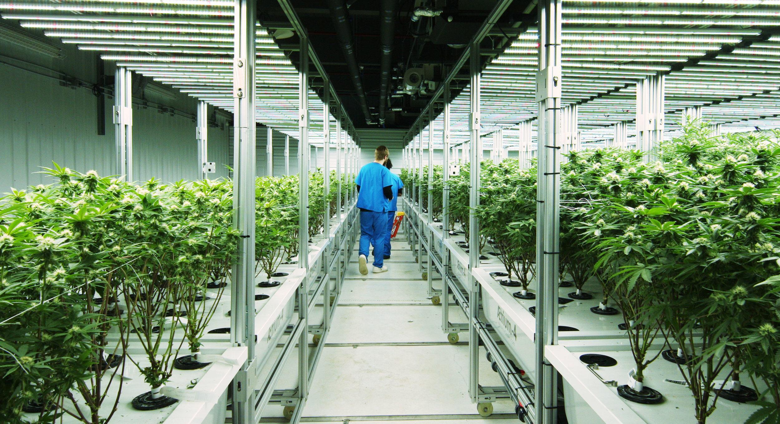 Monarch grow Indoor weed farm