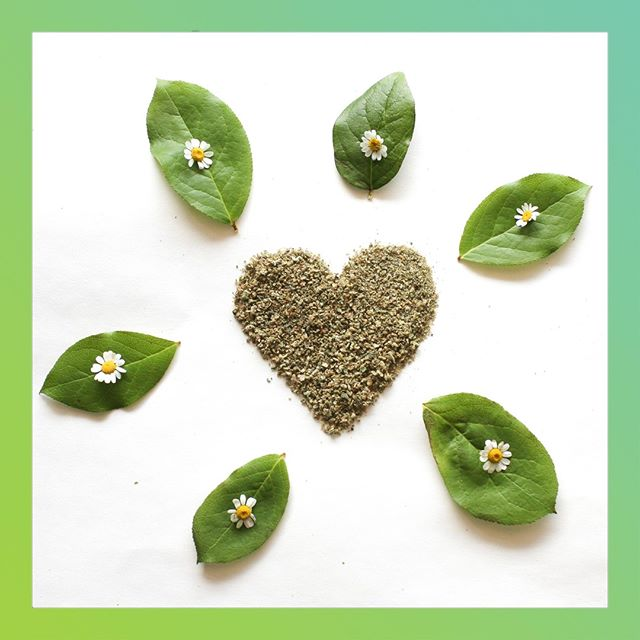 Cannabis Love 💚⠀ -⠀ -⠀ -⠀ #monarchgrow #plantpeopleplanet #cannabislove #sustainablecannabis #washingtoncannabis #cannabisart #peaceandlove #cleangreen #flowerpower
