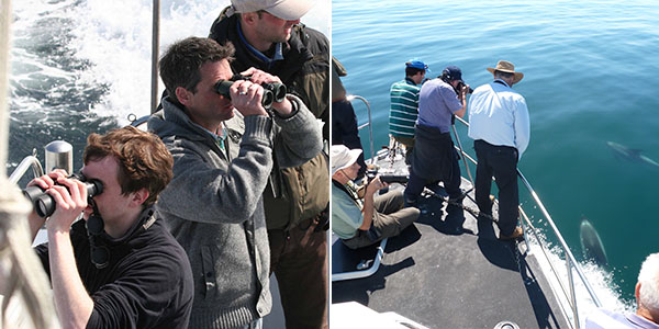 Surveying on the boat together with other marine researchers.