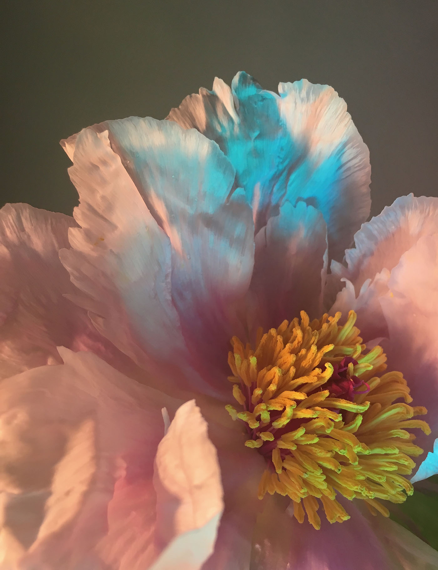 apbio_floral_designer_nyc_trendland_4.jpg
