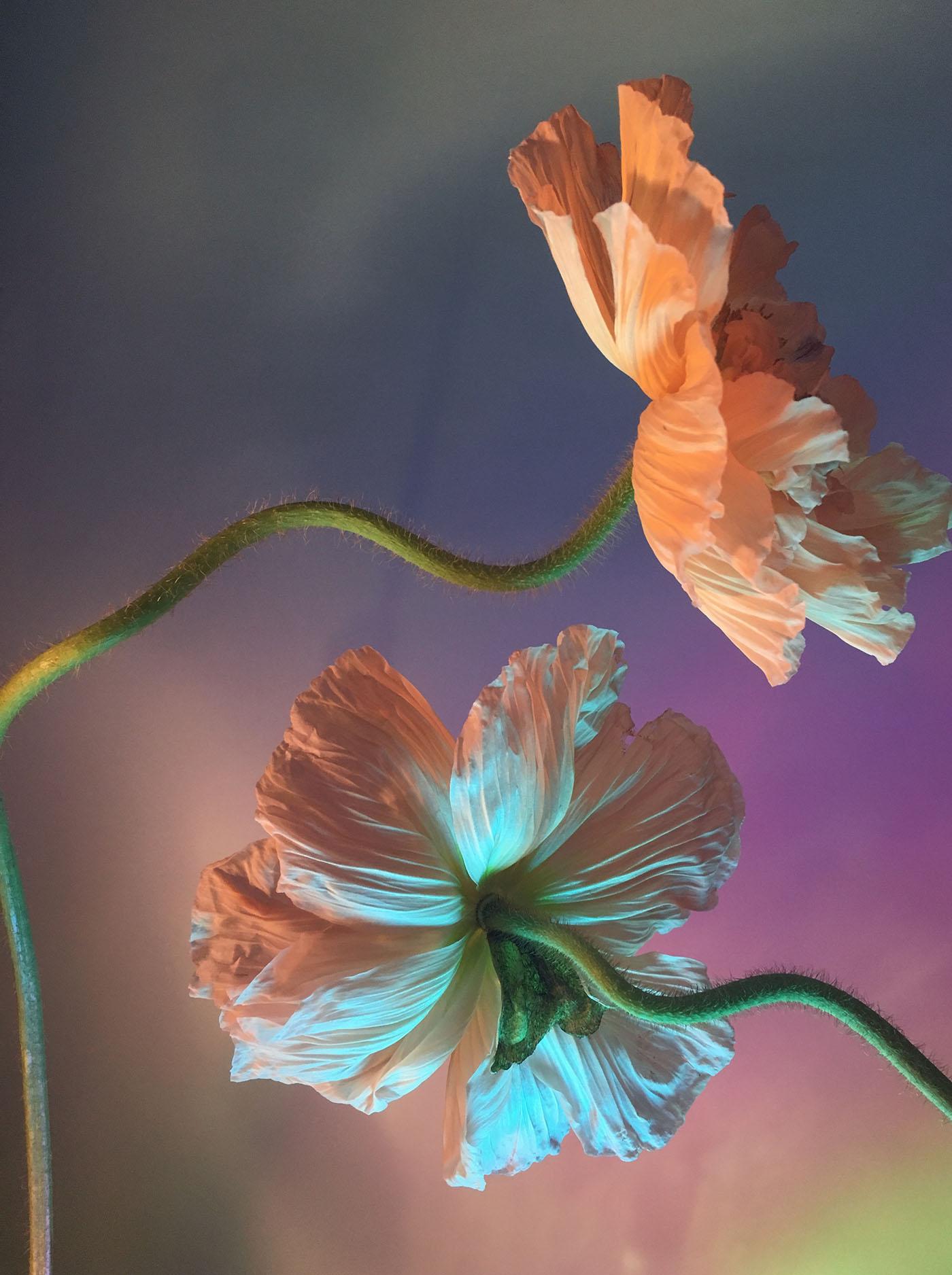 apbio_floral_designer_nyc_trendland_7.jpg