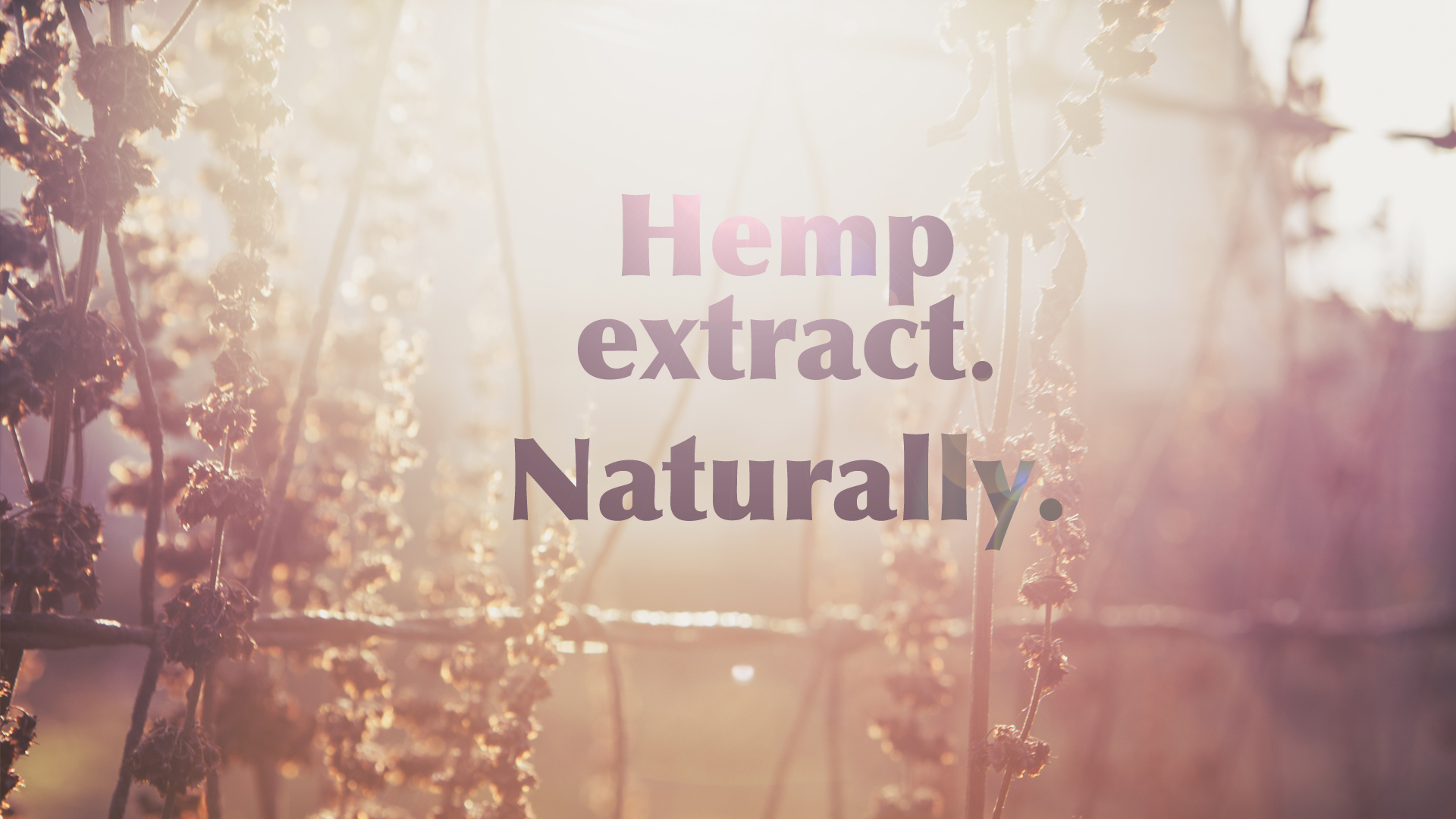 Norton-Valley-hemp-page.jpg