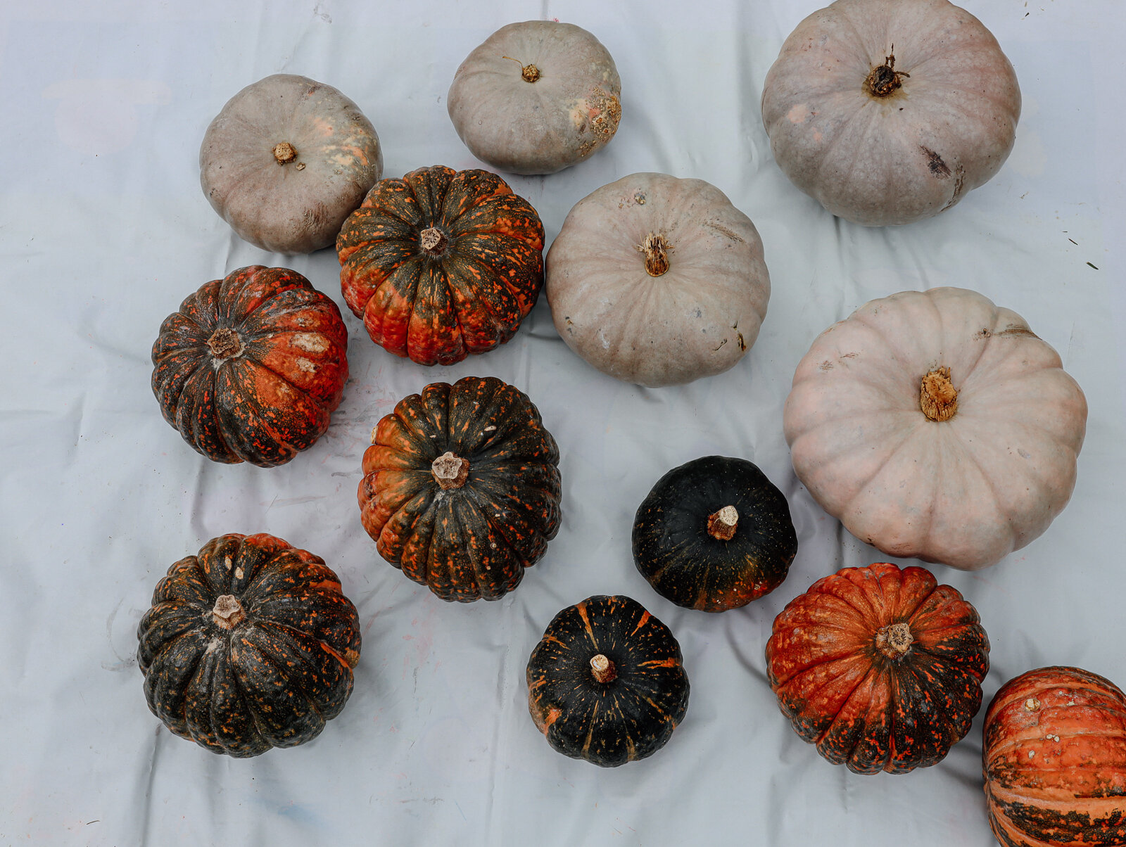 DIY_Painted_Pastel_Pumpkins_by_Clever_Poppy_raw.jpg