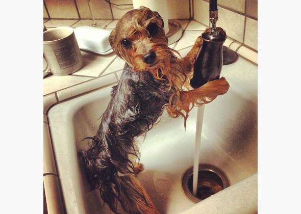 Wet Dog 5.23.19.jpg