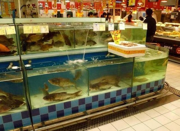fish tanks in chinese grocery store.jpg