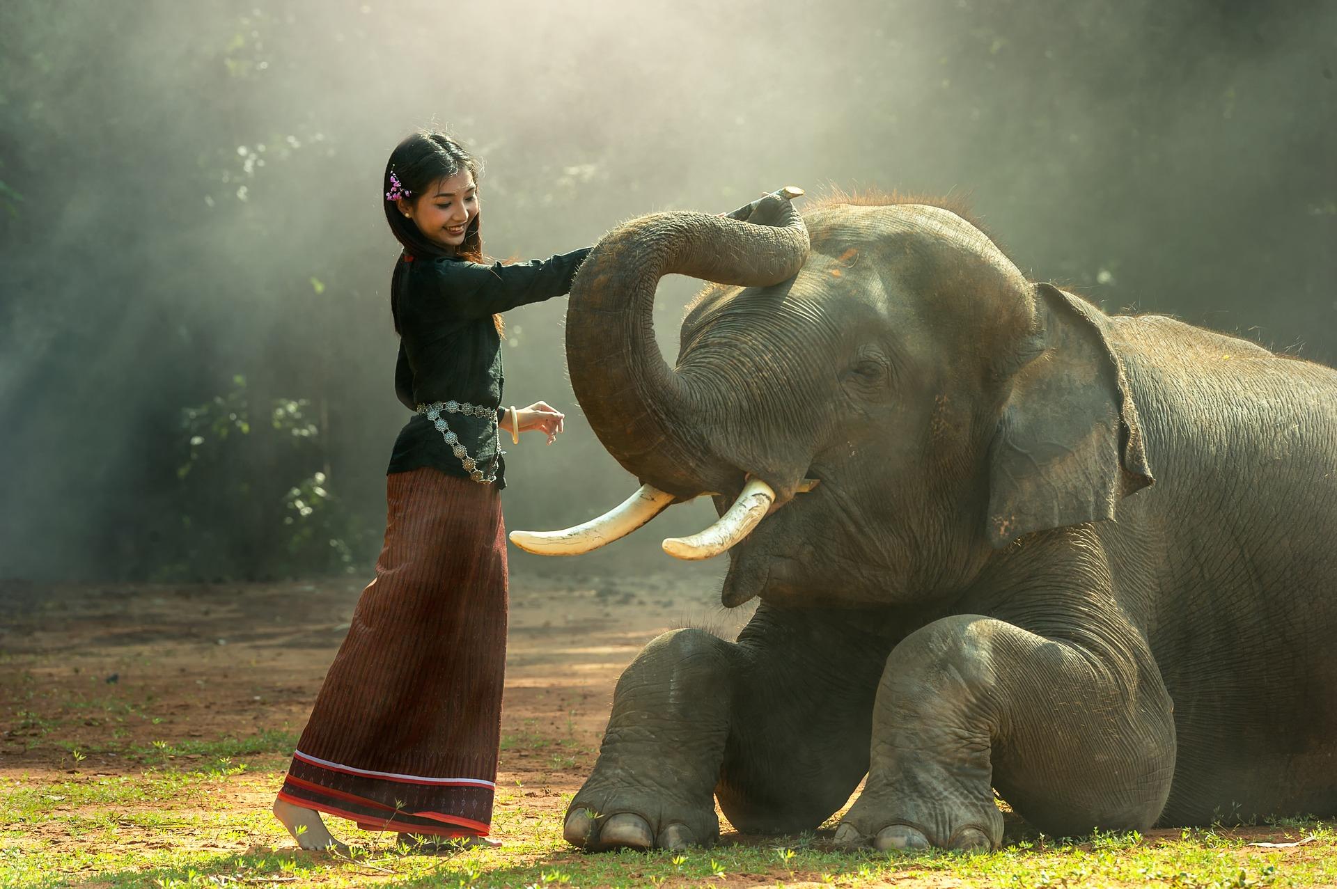 Cambodia Girl with Elephant.jpg