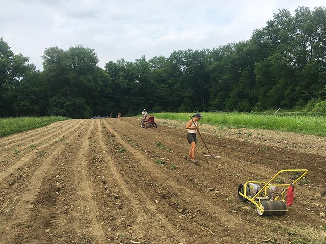Everyone on our crew played a role in putting 20 beds of beets and carrots into the ground yesterday. we'll harvest these roots in the fall and store and distribute them throughout the winter. #comingsoon #rootvegetables #csa #draftpower