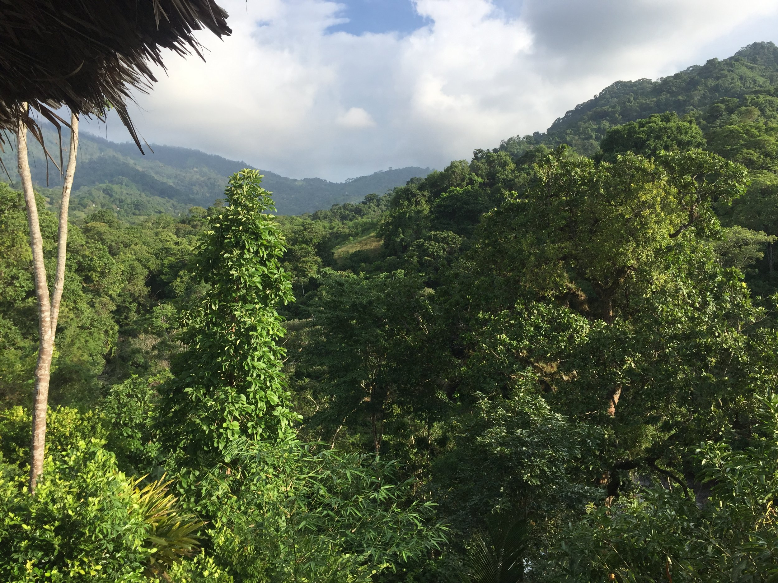 MINCA, COLOMBIA – JULY 26TH, 2017: Sanding on the balcony at Casa Relax hostel, enjoying the view out over the jungles of the Sierra Nevada de Santa Marta.
