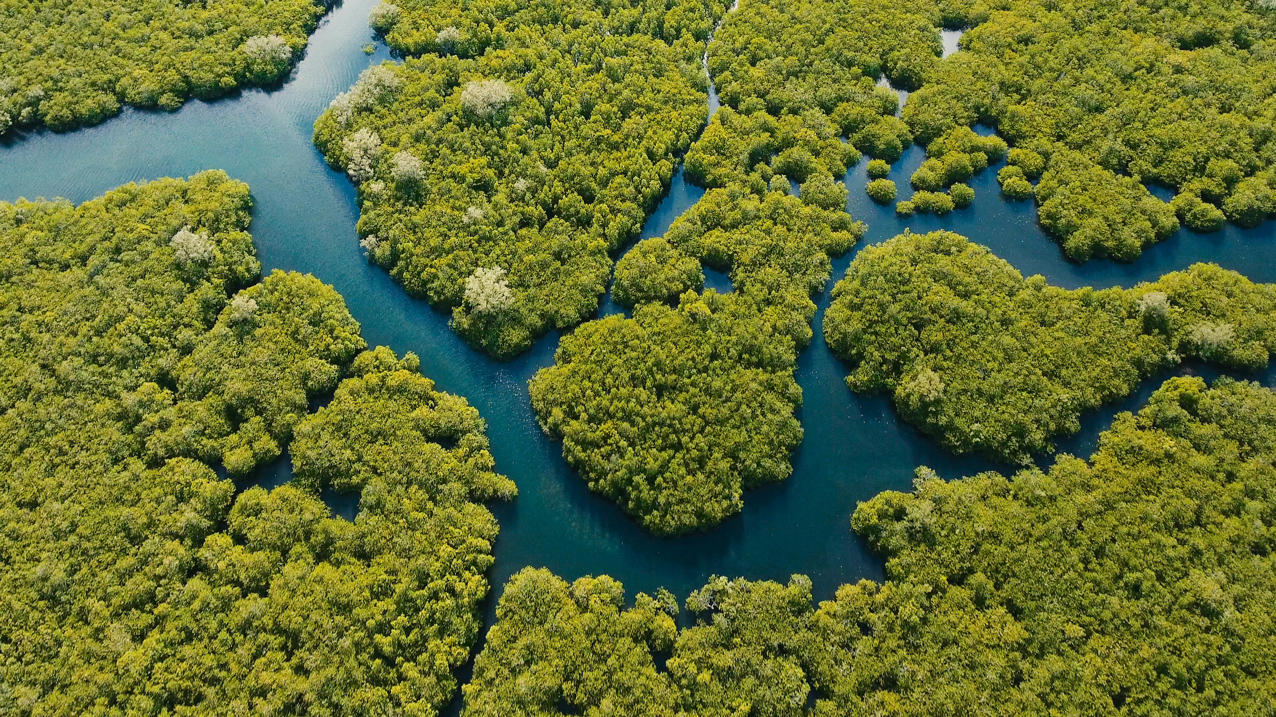 Pictured:  Aerial view of mangrove forest and river on the Siargao island, Philippines.