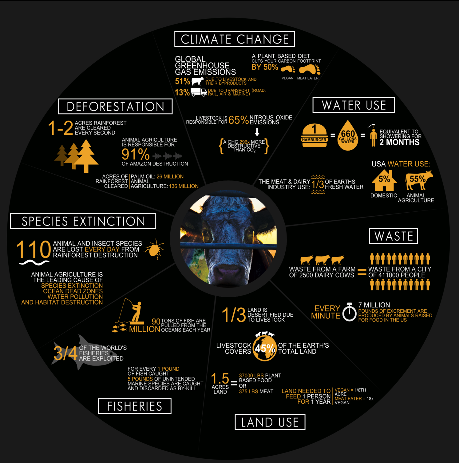 PICTURED:  The Cowspiracy infographic, still touting false information even though their own sources have drastically changed their estimates.