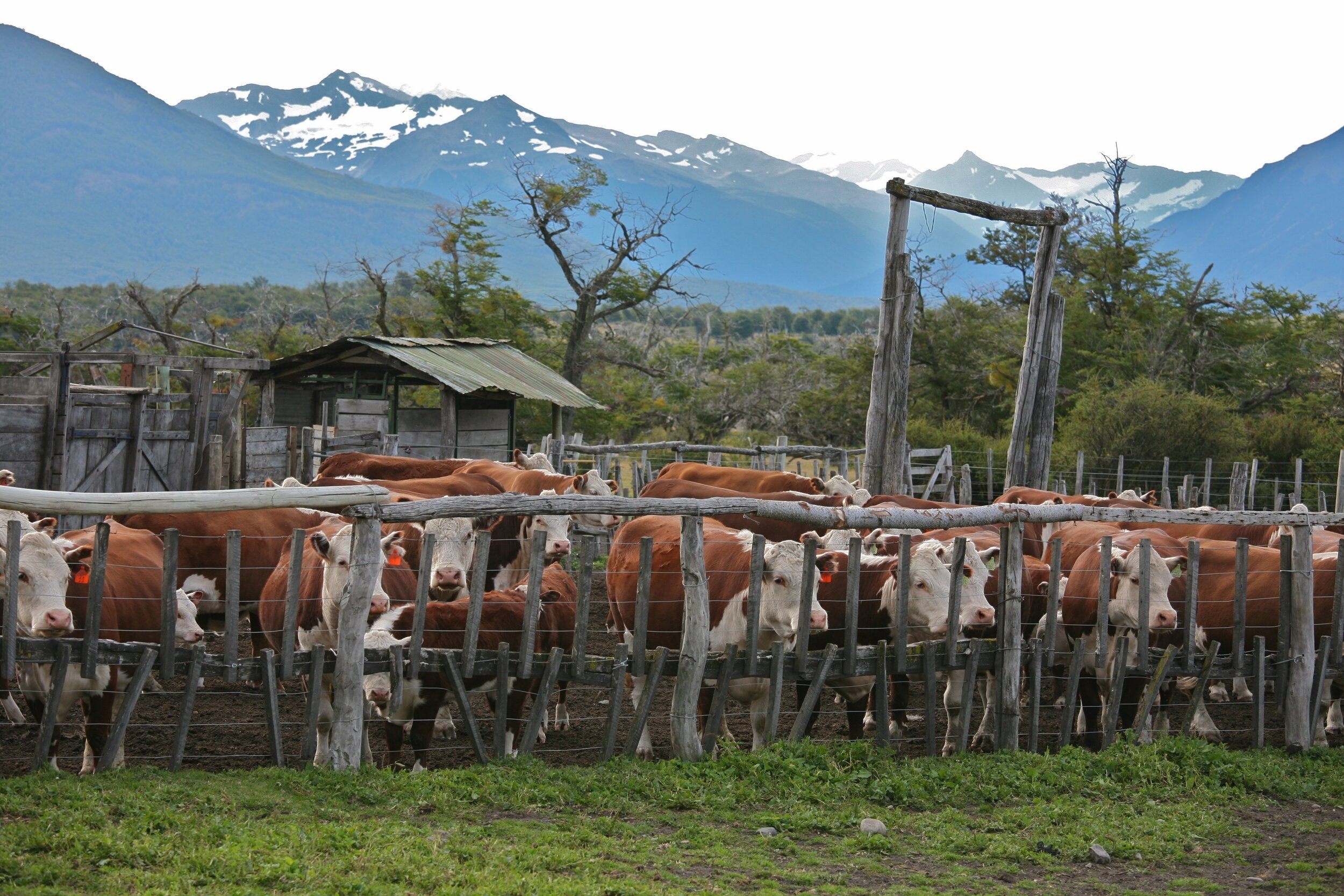 PICTURED:  Nibepo - Aike Ranch, El Calafate, Argentina.  Photo Credit Alex Proimos    CC 2.0   .
