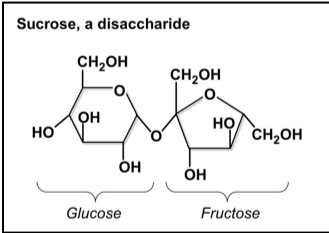 """Figure 1: Example of the chemical structure of disaccharide 'sucrose', which is composed of two monosaccharides, Glucose and Fructose. (dlc.dcccd, """"Carbohydrates"""")"""