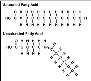"""Figure 4: Chemical structure of saturated and unsaturated fats (dlc.dcccd, """"Lipids"""")"""