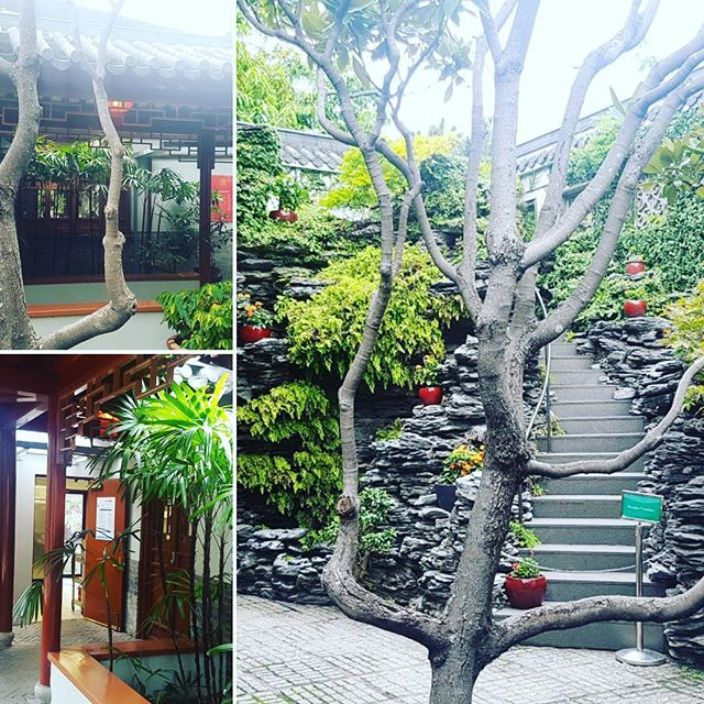 Project Managing the refurbishment project for the Chinese Gardens in Darling Harbour. #chinesegardens #darlingharbour