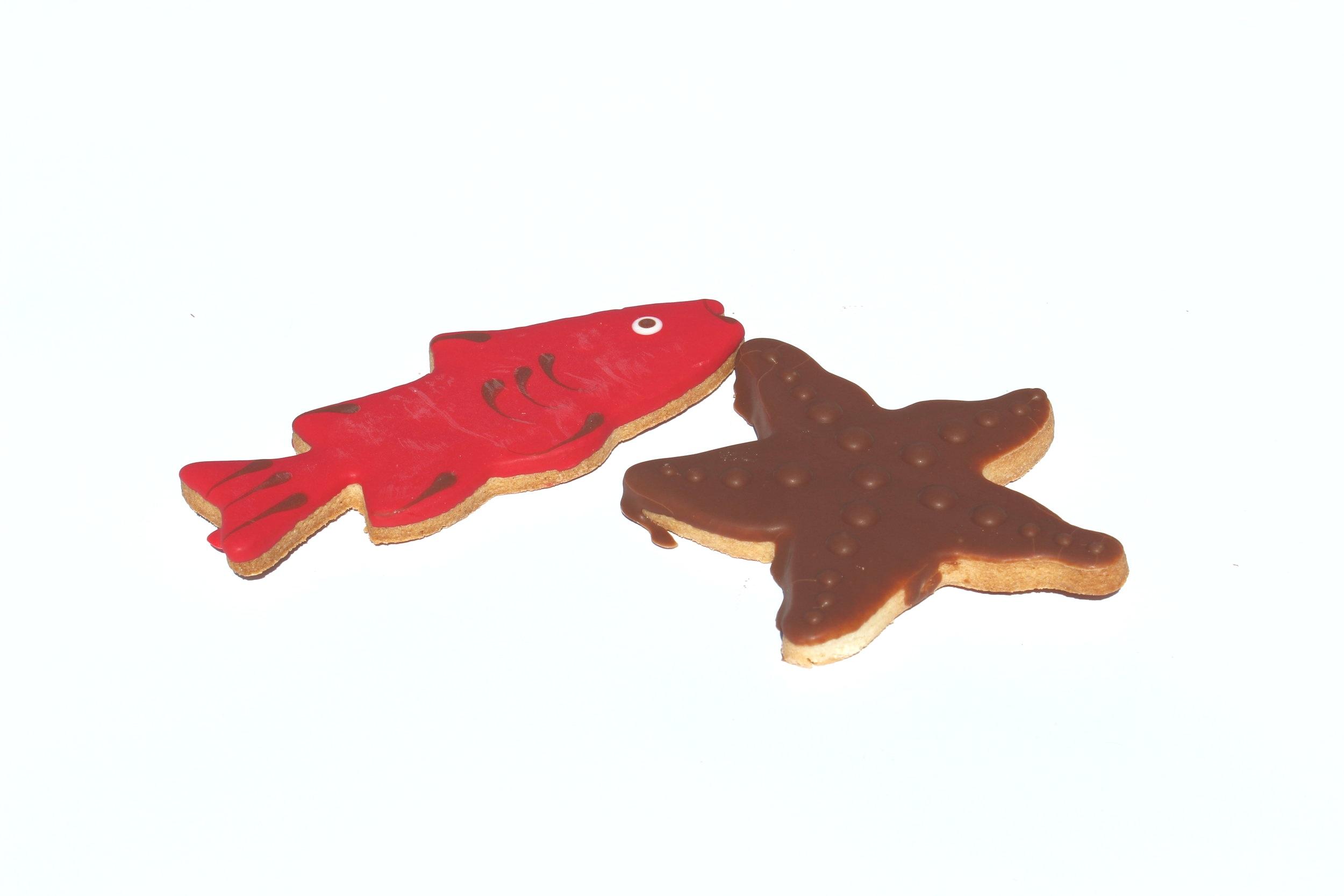 Starfish and Sharks