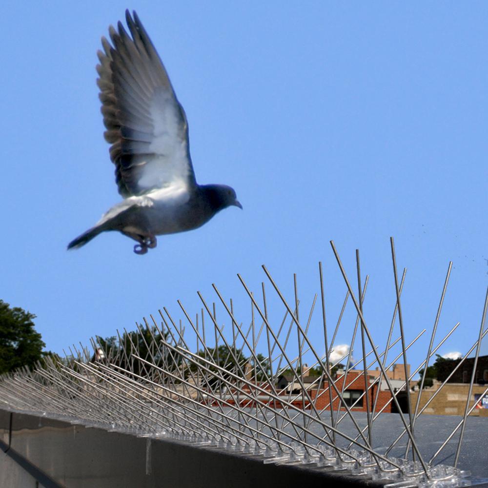 bird-x-animal-rodent-control-sts-50-64_1000.jpg