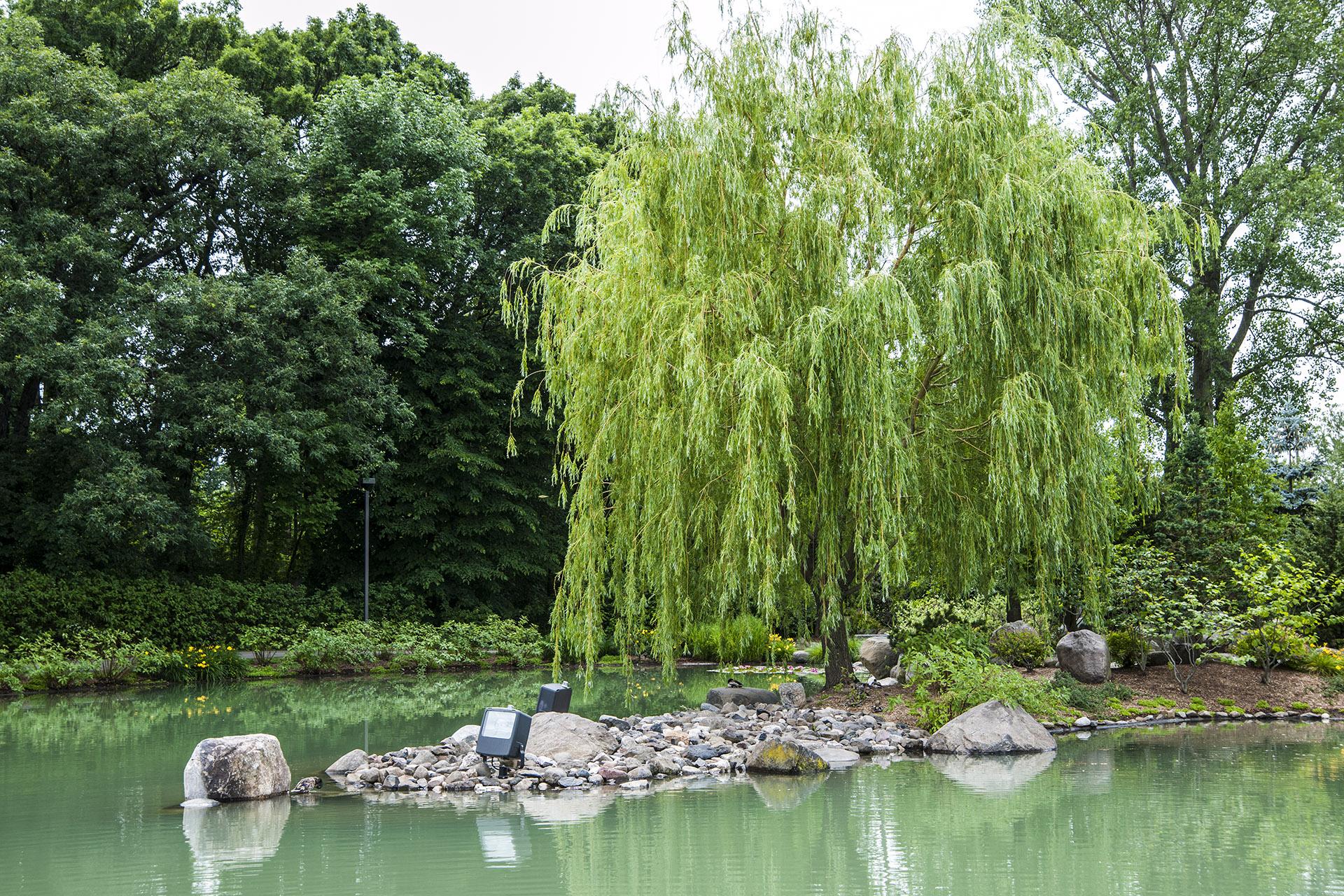 willow on stones.jpg