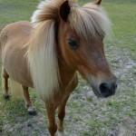 Bakas-Horses-Buddy.jpg