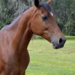 Bakas-Horses-Martini.jpg