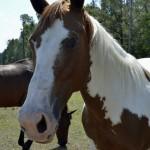 Bakas-Horses-Maybe.jpg
