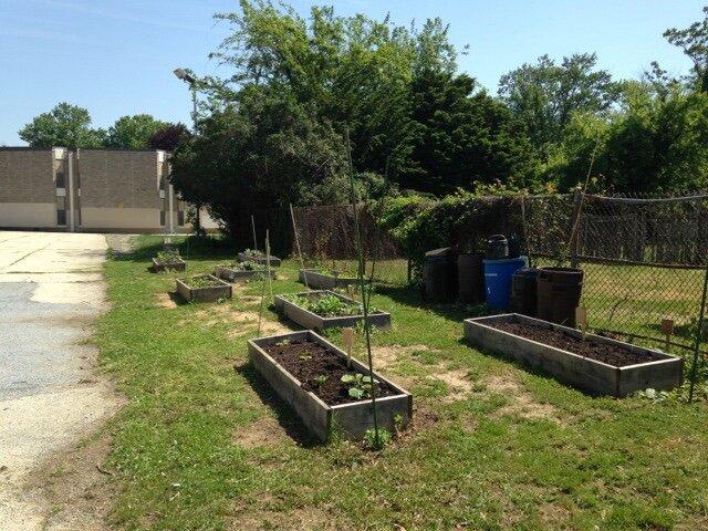 Garden first year.jpg