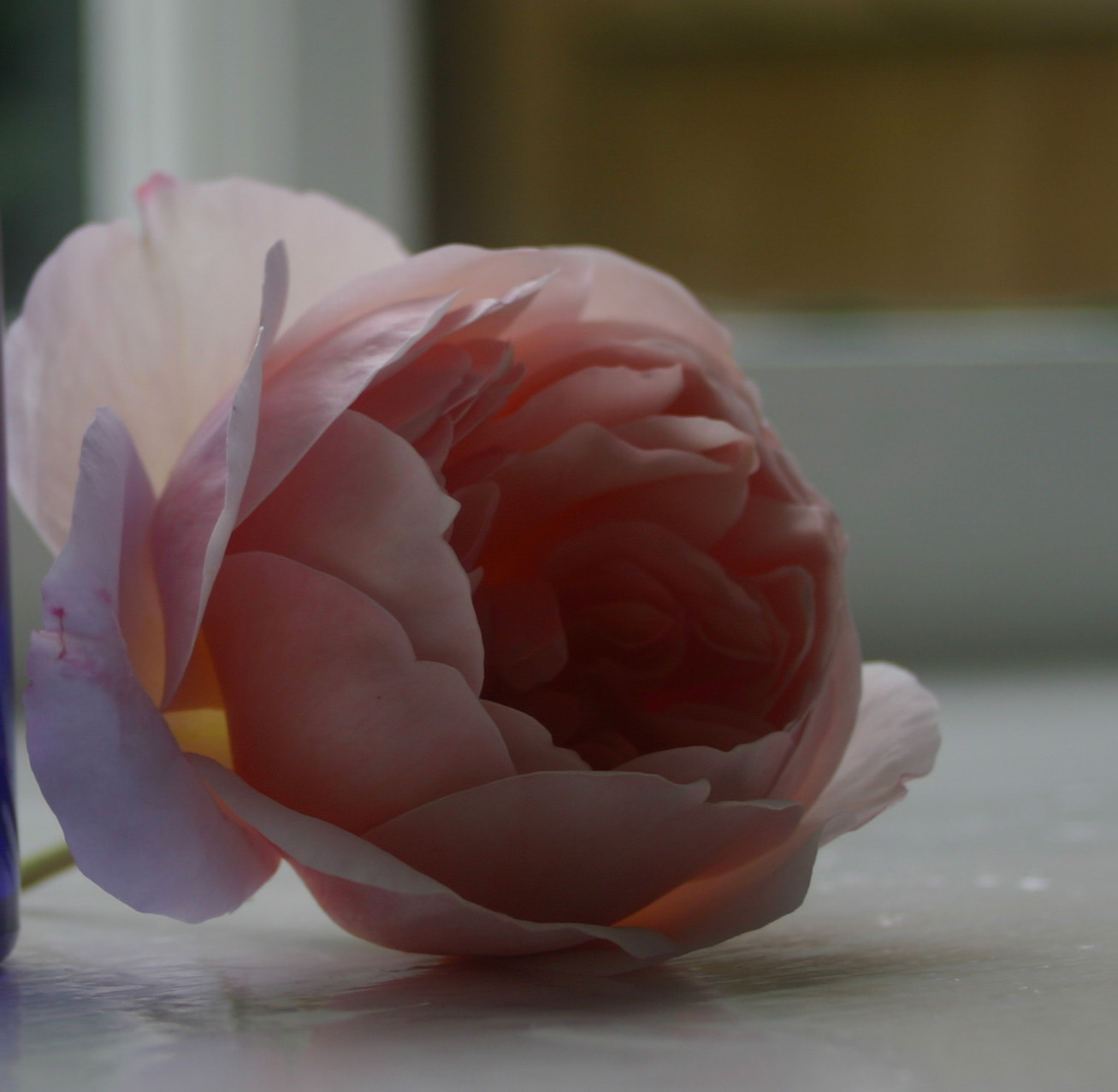 Eternal Youth - The Power of the Rose?