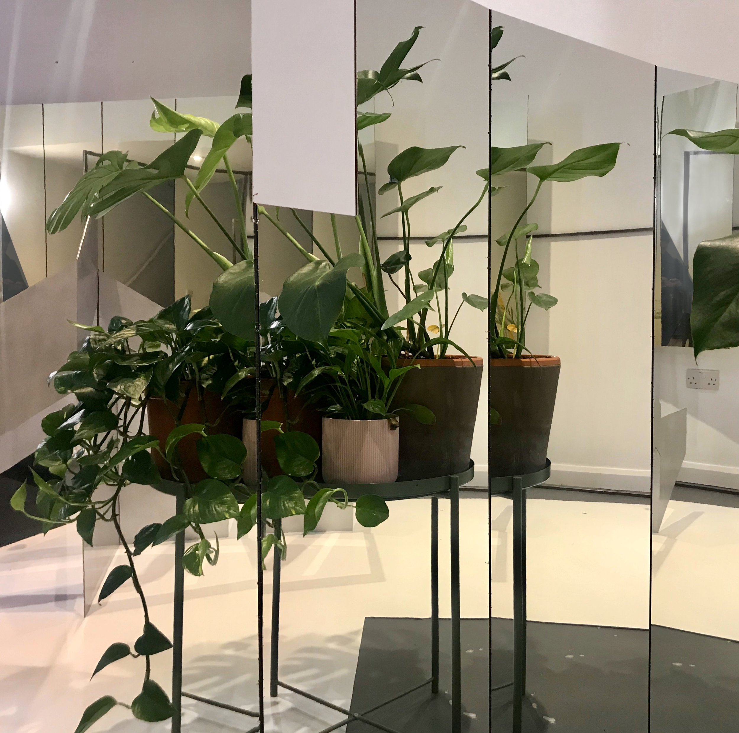 4. Plants in the clear mirror.jpg