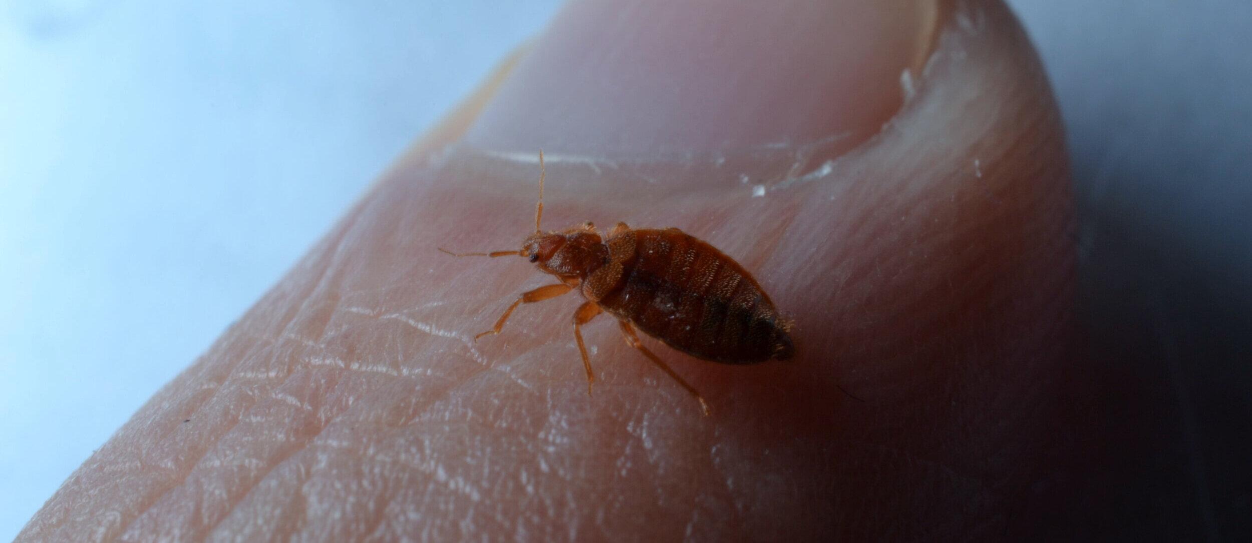 Calgary Bed Bug Exterminator Bed Bug Removal Calgary Pest Control Professional Exterminator Services