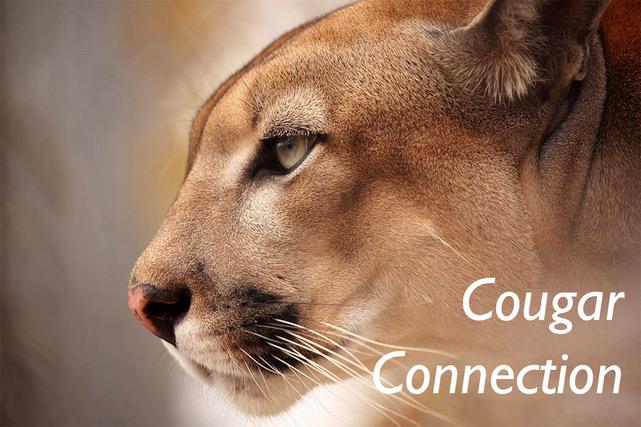 CC Logo.jpeg