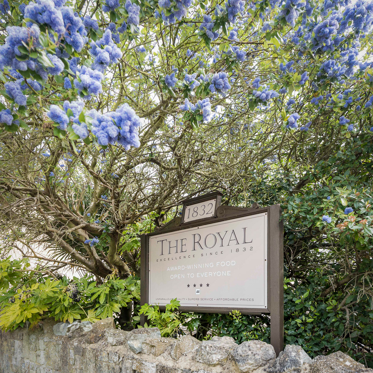 The Royal Hotel, Ceaonothus