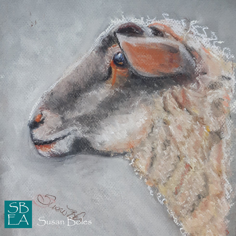 Sheep 9x12, Pastel on pastel paper