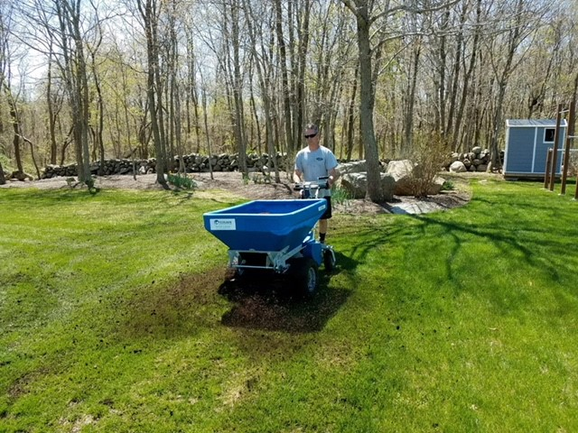 Lawn Top Dressing and Over Seeding - Before