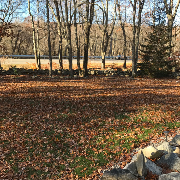 Fall Lawn Cleanup Before