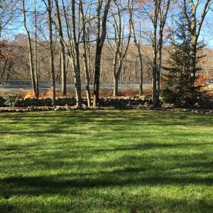 Fall Lawn Cleanup After