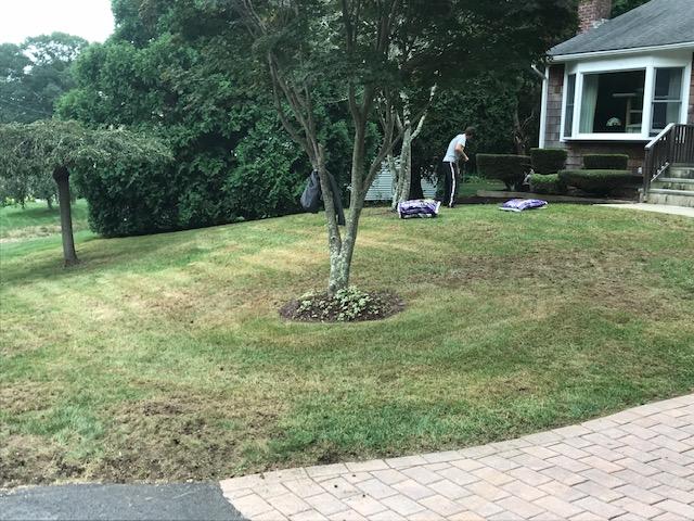 Lawn Rehab - Before
