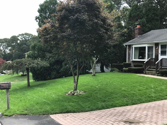 Lawn Rehab - After