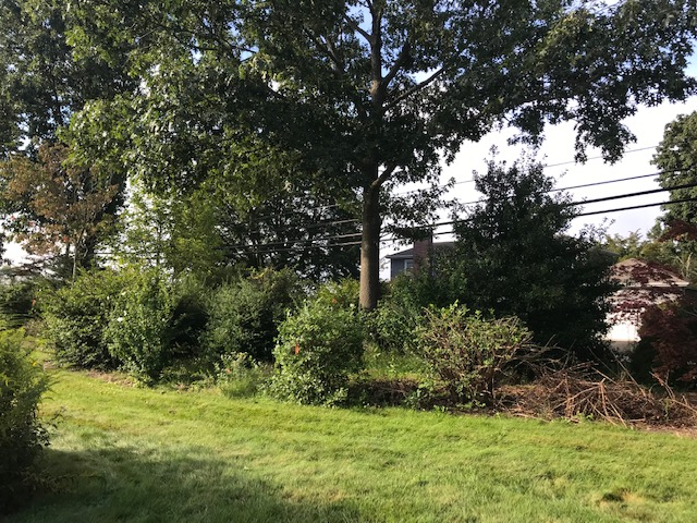 Plant Bed Maintenance with Mulching - Before
