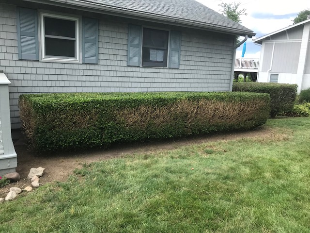 Bush Trimming - After