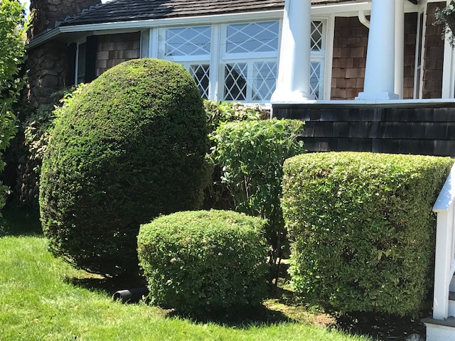 Finished Hedge and Brush Trimming