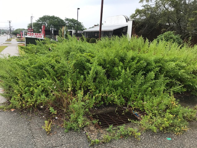 Vacant Lot Clean Up - Before