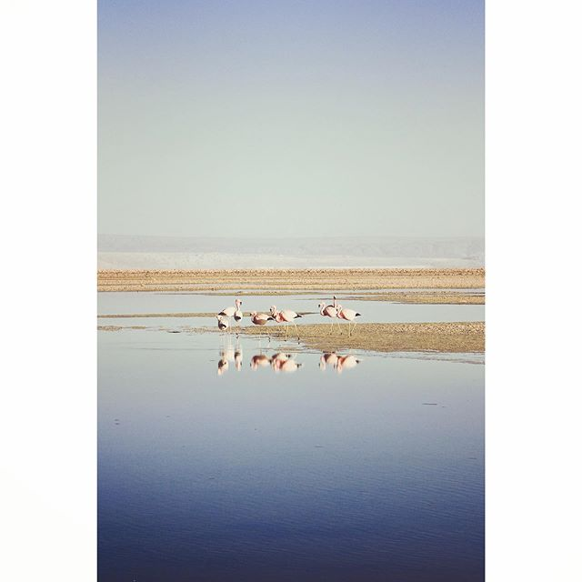 #flamingofriday #flamingoparty #atacamachile #chiletravel #adventuretravel #cntraveler #passionpassport #tinyatlas #tlpicks