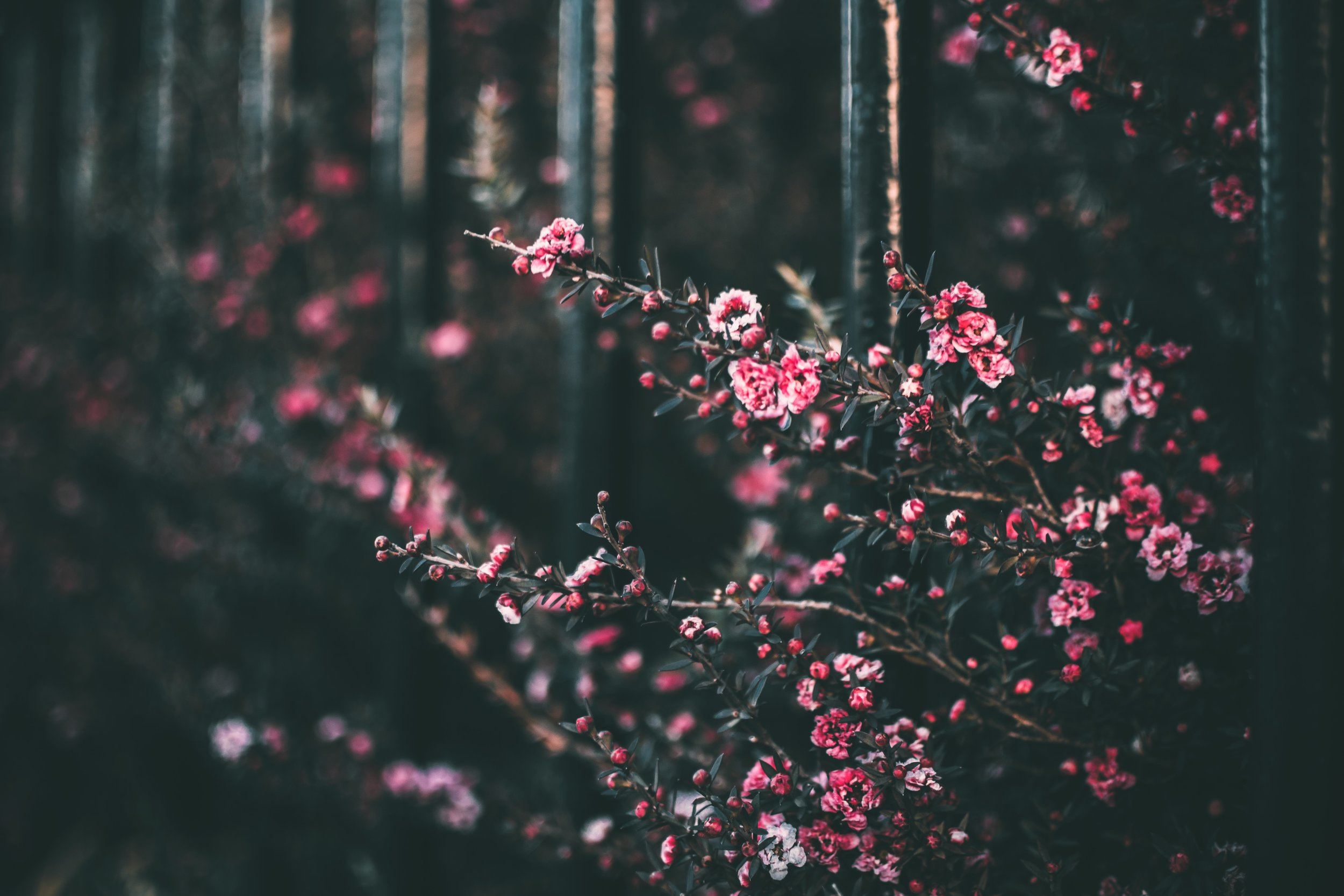 blooming-blossom-blurred-background-1182338.jpg