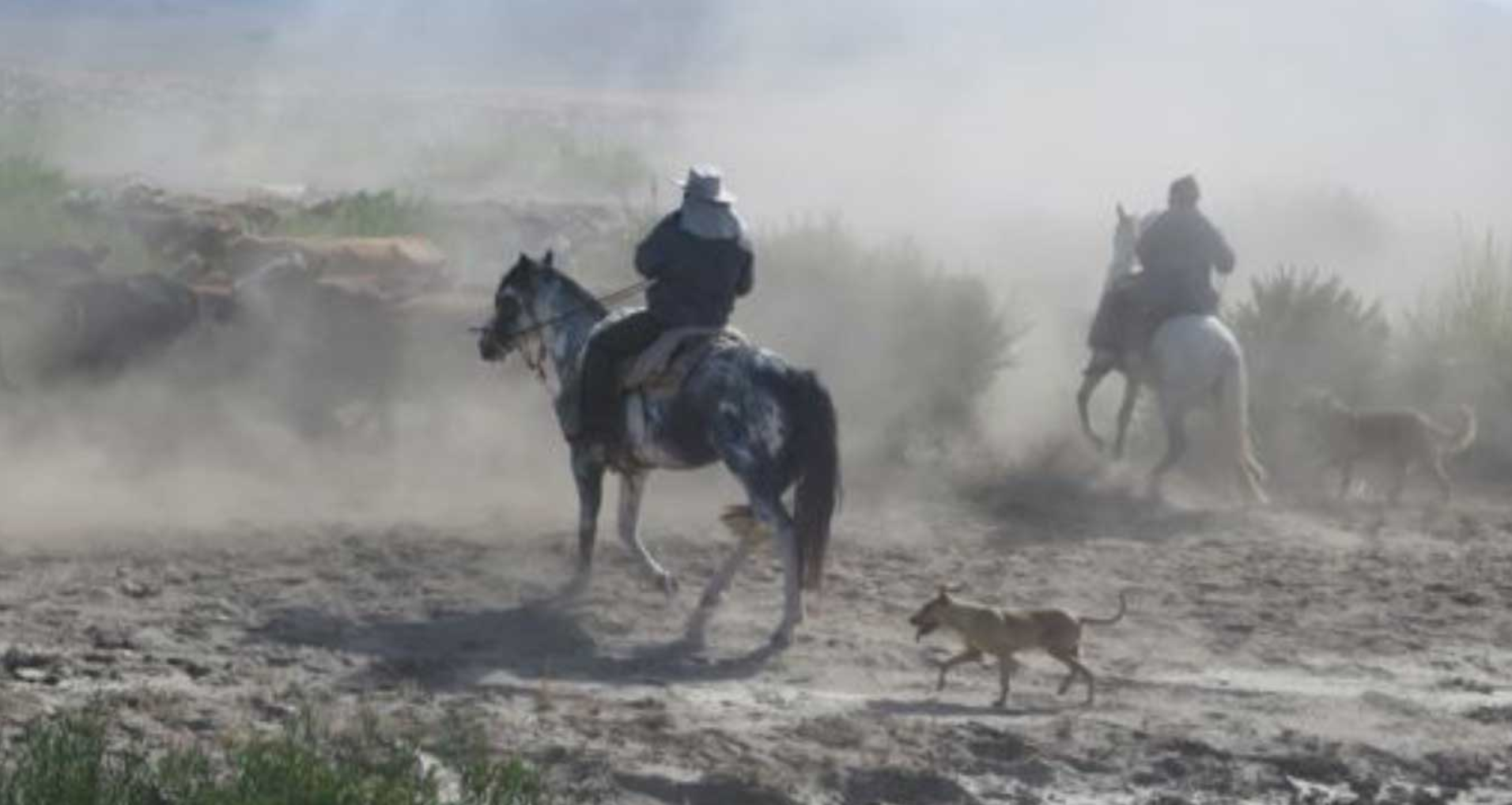 In action: Samuel, on the young stallion paint, Natalio, and dogs.