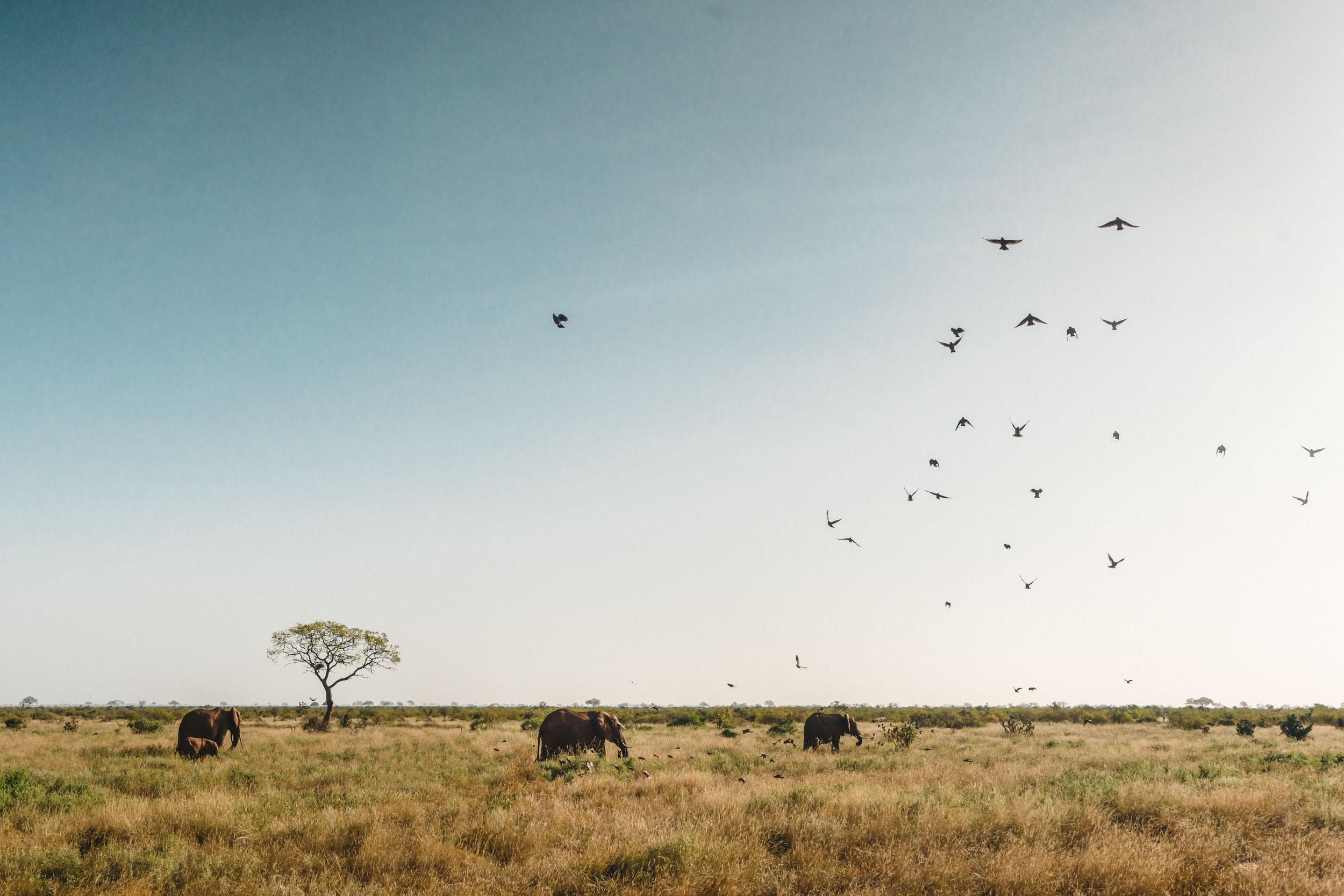 Elephants African landscape.jpg