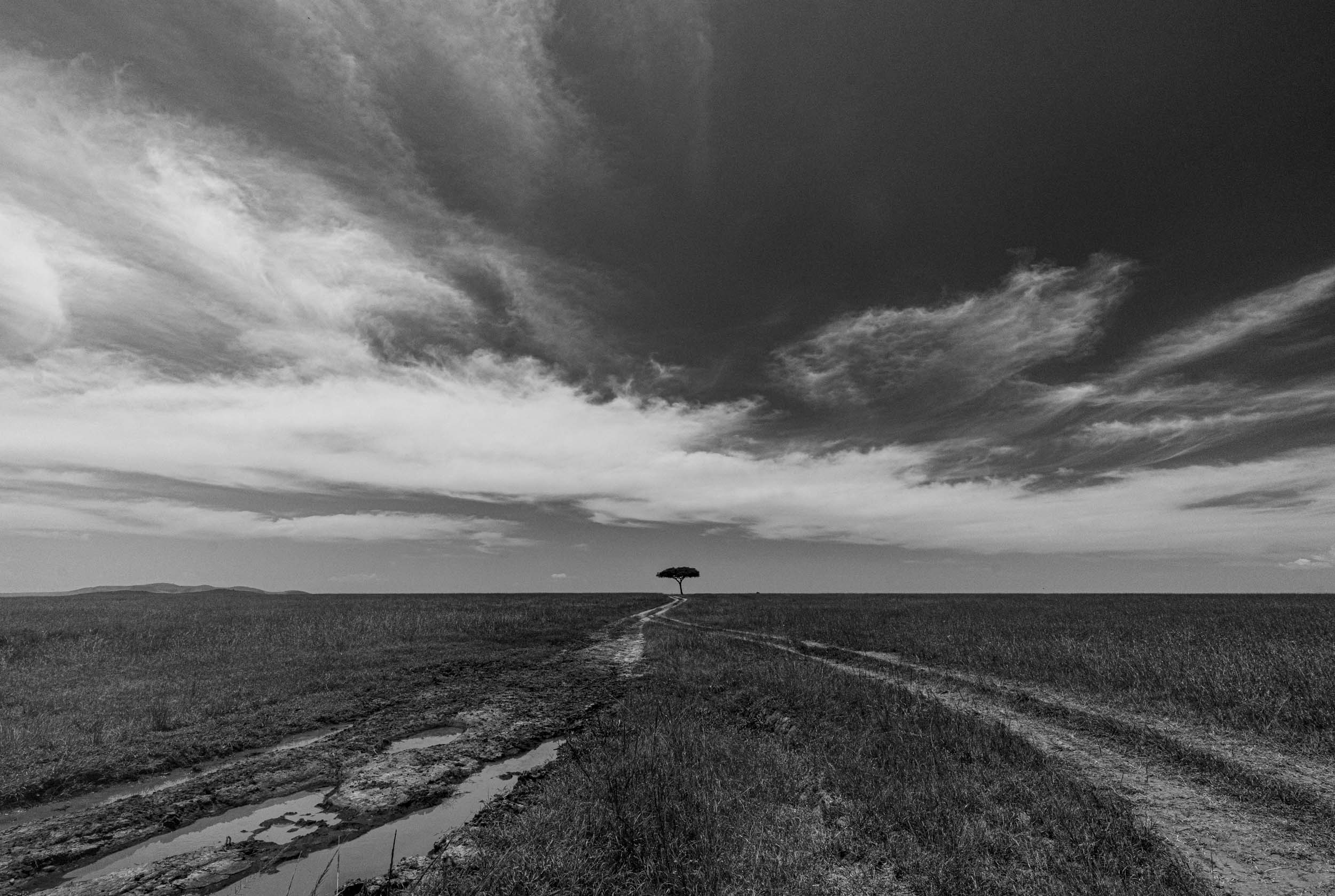 Single acacia tree against sky africa landscape black and white.jpg