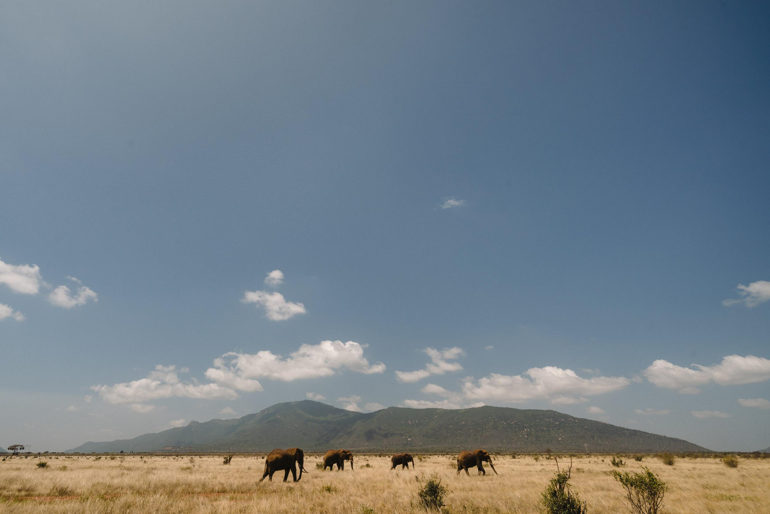 elephants african savannah landscape.jpg