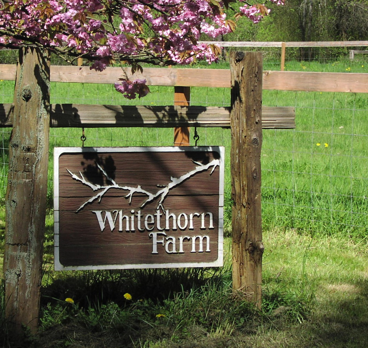 Whitethorn Farm Road Sign with Cherry Blossoms
