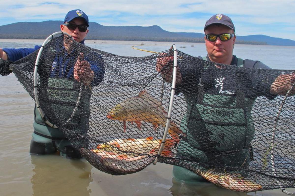 IFS-Report-to-Anglers-Alliance-Tasmania-November-2016-FINAL-1-1.jpg